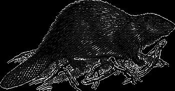 oct 29 illustration.pixabay