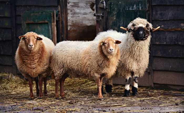 From Sheep to Cloth, PartI